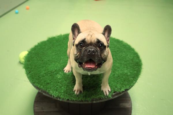 Dog Assessment