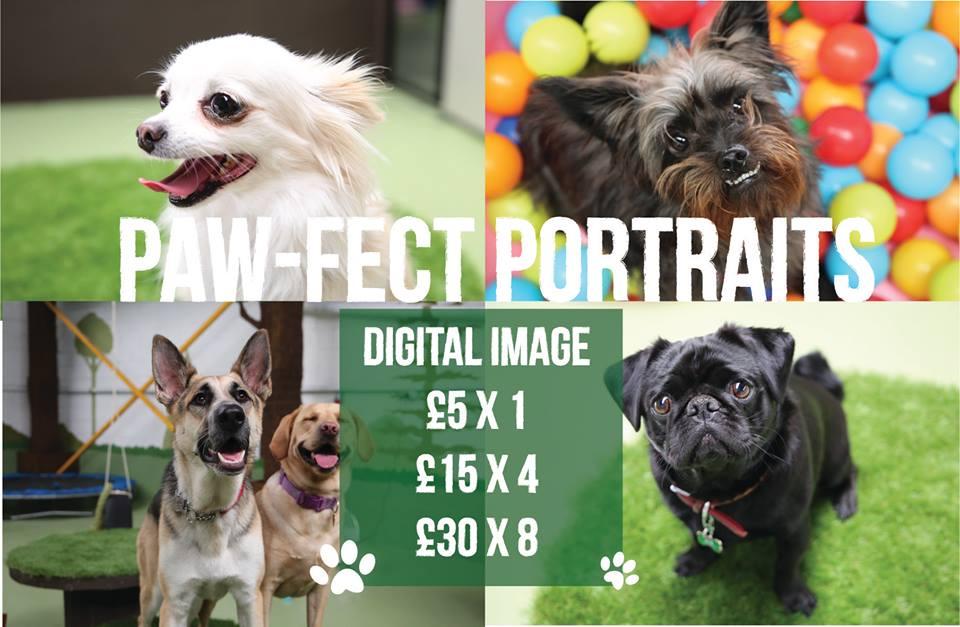 Paw-fect Portraits!